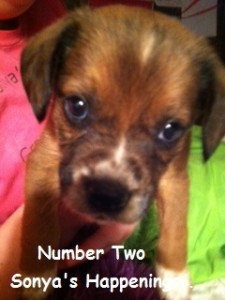 Number Two- Our Newest Addition